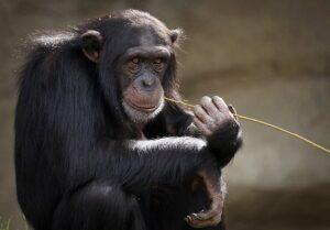 Chester Zoo Plassey
