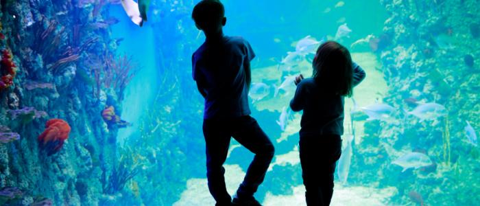 Blue Planet Aquarium_Plassey